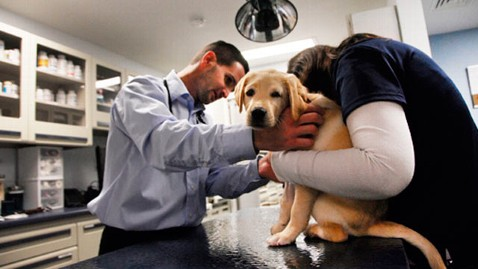 steroids veterinary use