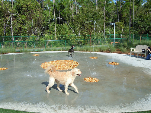 Backyard Water Features For Dogs : Outdoor dog park with water features